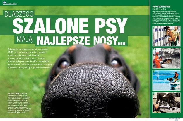 dlaczego szalone psy mają najlepsze nosy